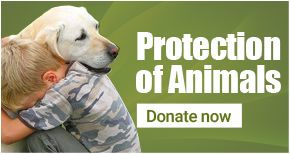 Protection of Animals Charities