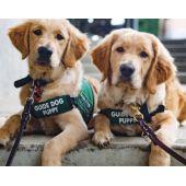 Donate to save animals